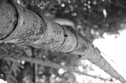 Jardim Botanico-20130123_154322